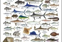 Virginia Ichthyology - Fishes