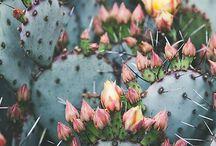 Plants'n'flowers