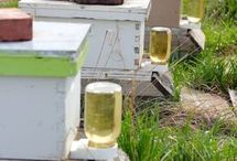 bee nice honey