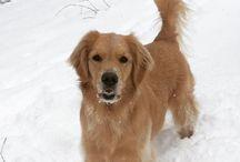 Dogs + Snow