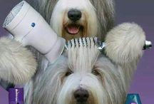 Σκυλιά Χτενίσματα