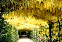 Gardens To Visit / Gardens we think look spectacular and on our bucket list to visit!