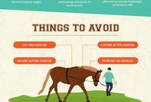 Horses ' World