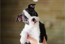Puppy love / by Gwen Smith Embrey