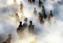 Pferdefotos und Videos