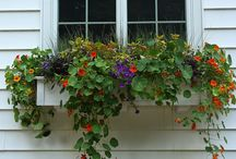 Window boxes.