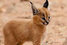 Cub animal