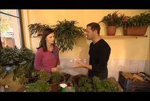 BYLINKY-pěstování,sklizeň,využíti...