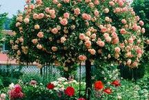 gradini si flori de vazut