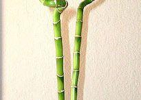 plants / by Tabbie Riddlesperger