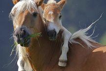 equine  / by Leonie Lewis
