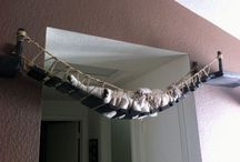 Cat Shelves