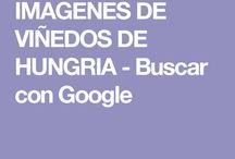 IMAGENES DE VIÑEDOS DE HUNGRIA