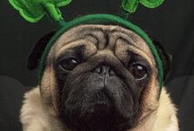 St Patrick's Day Pets / by Pet Sitters Ireland