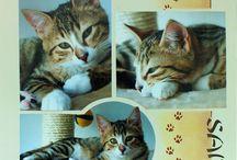 web / kattepensjonat inspirasjon