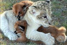 Baby Animals... So Cute!