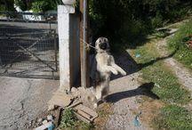 Dog Social Awareness