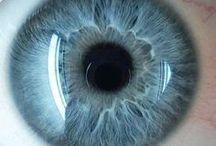 Iris diagnostik