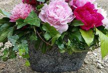 Fleur & Nature - Domaine des Lochereaux