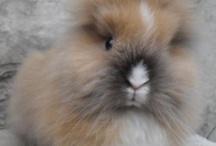 91 Bunny