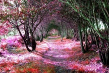 Amazing Places & Spaces /   / by Sherrie Stevens