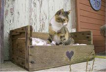 kitty-catty