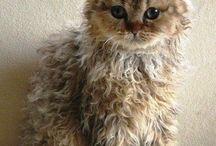 kitty cats