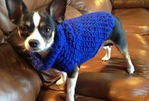 knitted dog yearses
