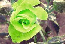 Bloemen / Bloemen