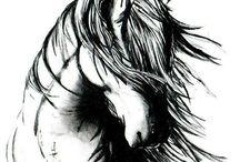 Cavalli immagini