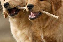 cute animals / schattige grappige en leuke dieren