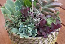Succulent Centrepieces / delicately crafted succulent centrepiece pots.  Can be purchased via etsy.com/shop/trailofivy
