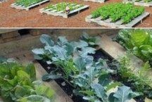 Bahçe işleri