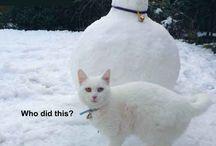 Cat memes for bad days