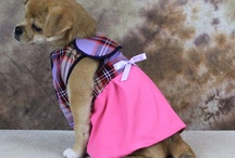 Dog Dress / by Mighty Dog Clothes co.