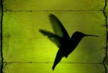 Everything Chartreuse / by Julie Steigerwalt