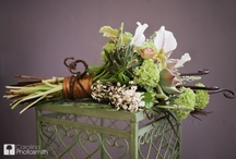 Succulents / Succulents in container gardens, centerpieces and wedding bouquets.