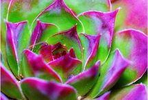 Flowers / by NeldaandTerry Crocker
