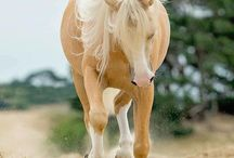 Horses I love you