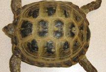 Tortoise Fun / Cool stuff for our cute little Russian tortoise Shelldon.