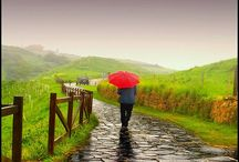 paths, trails & walkways / by Beverly Daniel