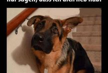 Funny Tiere