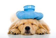 Canine 1st Aid