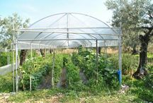 greenhouse serre traditional / Serre