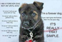 DOGS / Sensitivity, loving nature of this misunderstood & mistreated breed. / by Stephanie Lena