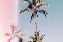 [ SUMMER ]