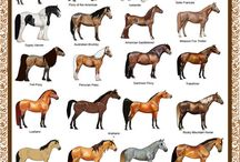 Horse Colors & Breeds / Different colors of horses and different breeds