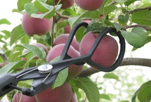 An Apple A Day / No more tugging and yanking that damages the tree! You can pick one apple out of a cluster without others falling to the ground, you can easily reach the best and highest apple in the tree that usually goes to waste, with The Twister Fruit Picker's®.