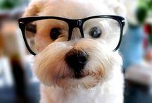 perros y cosas que me gustan