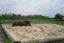 Zand paddock